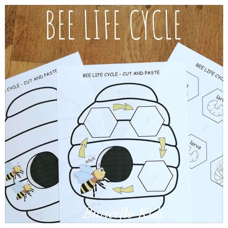 BEE LIFE CYCLE CRAFT